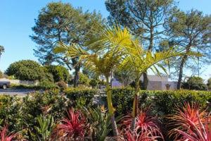Marymount plants